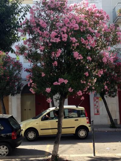 Typical views in Mola di Bari.
